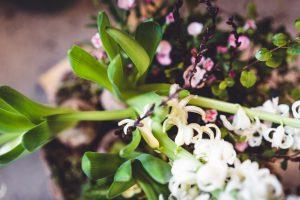 Green - Selbstversorgung und Nachhaltigkeit